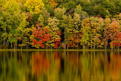 Fall Foliage -- Trees with Water
