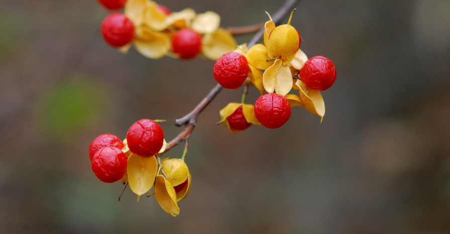 Fall Berries (2)