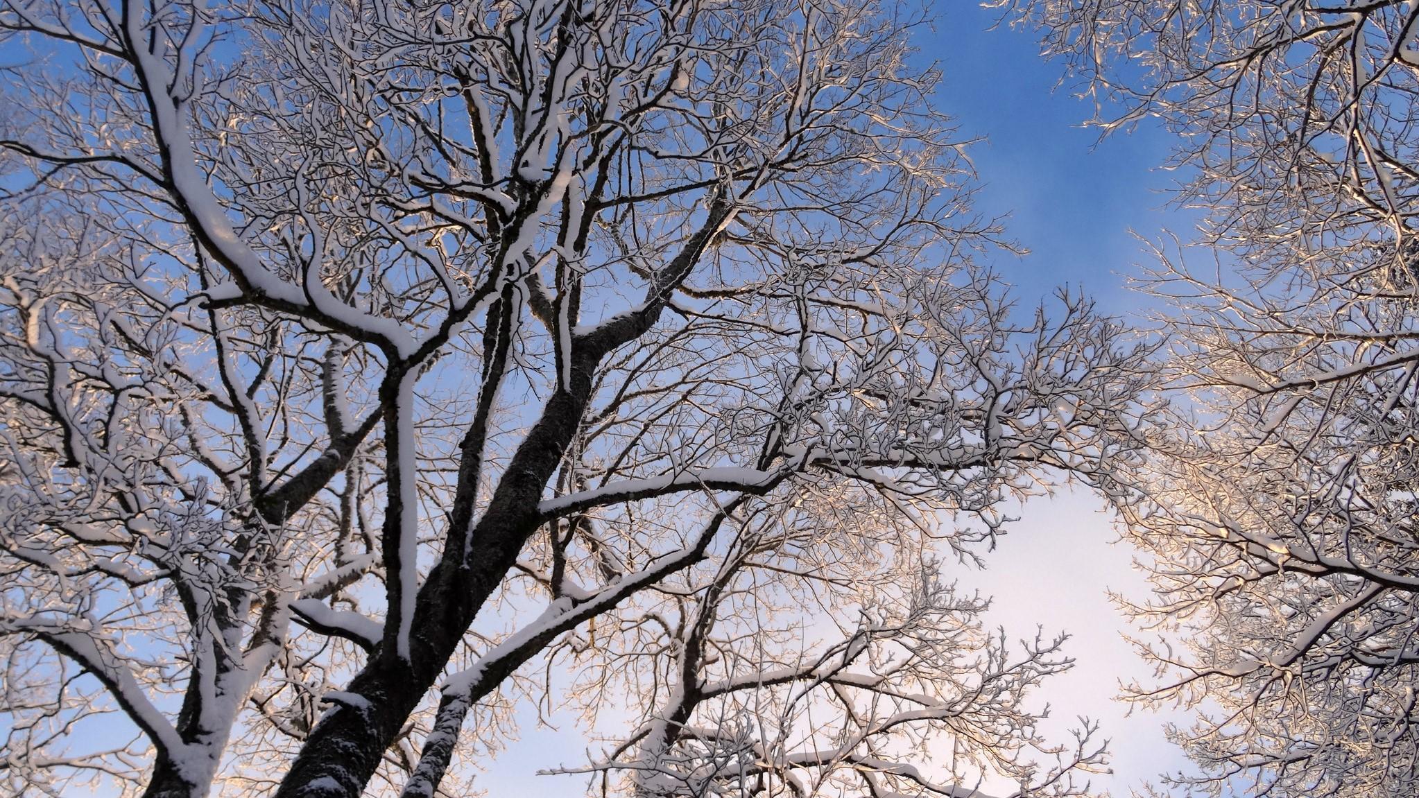 Winter Tree-2