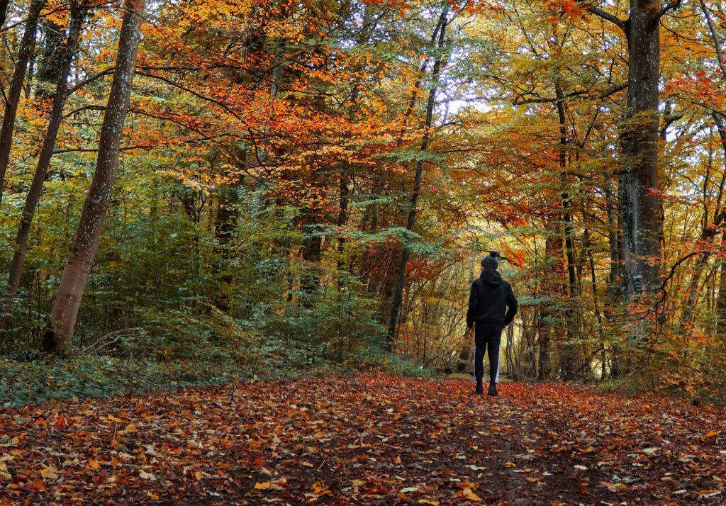 Walk in Fall Foliage -- Isham Photos, Unsplash (cropped)