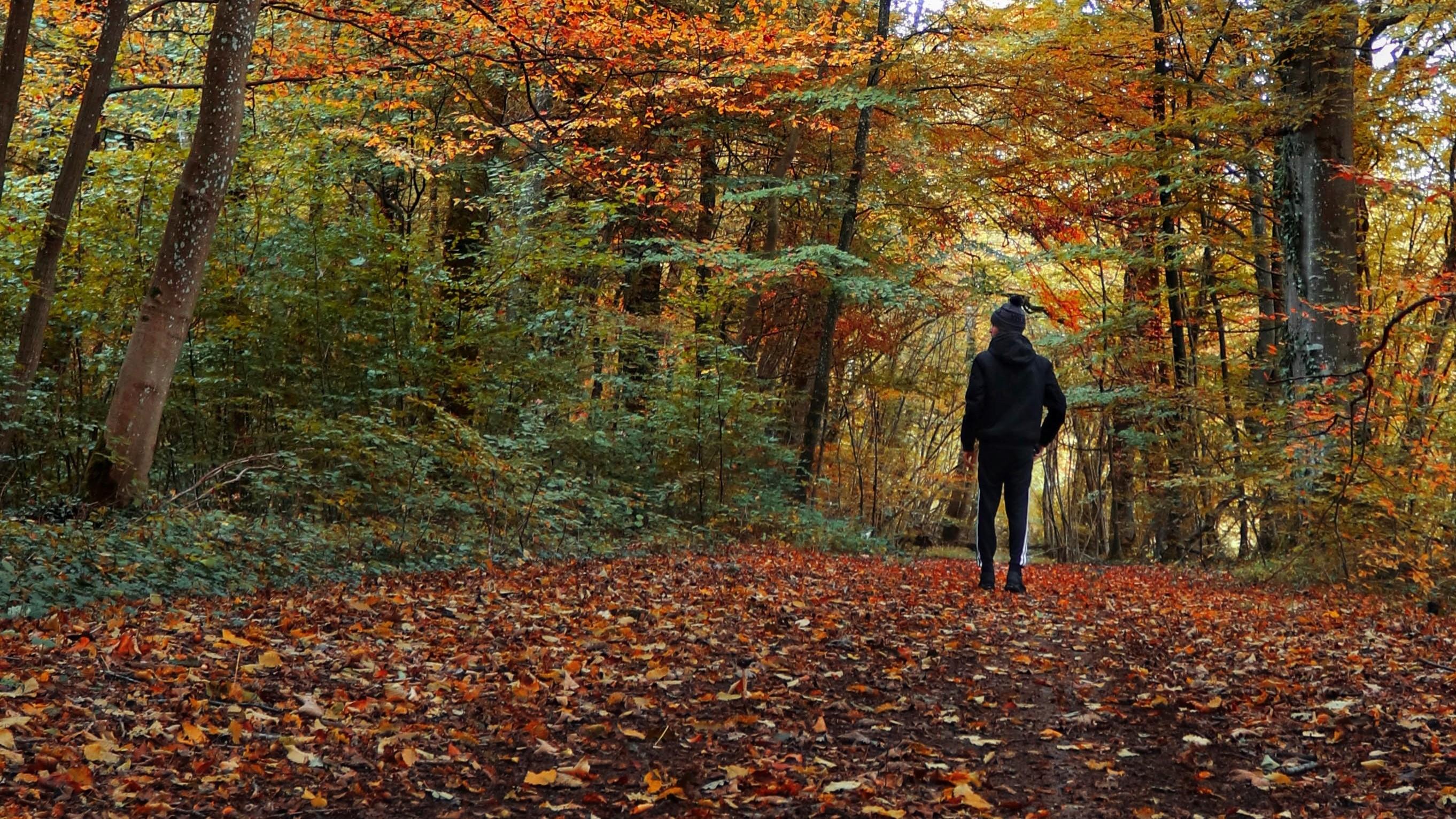 Walk in Fall Foliage -- Isham Photos, Unsplash (cropped) (2)