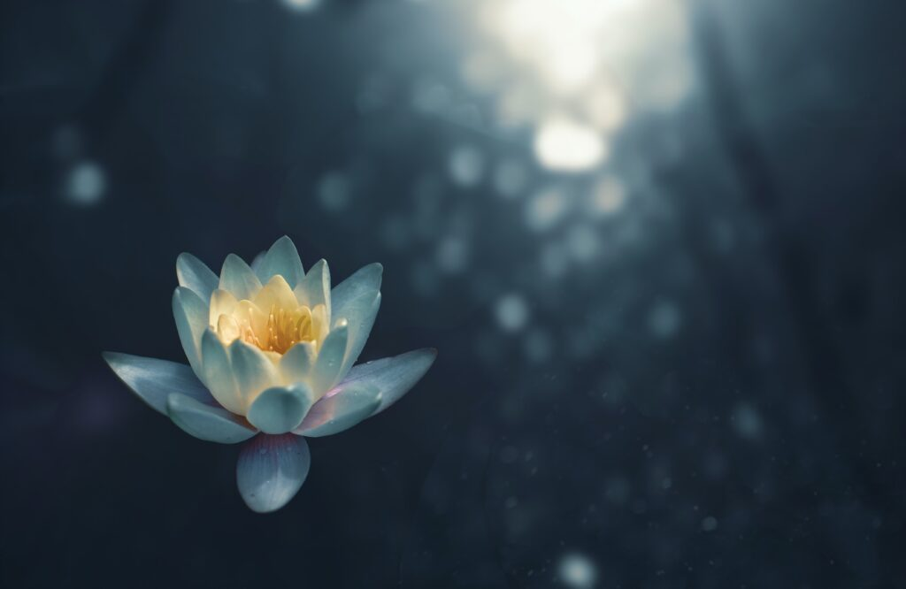 Water Lily -- Deep Listening