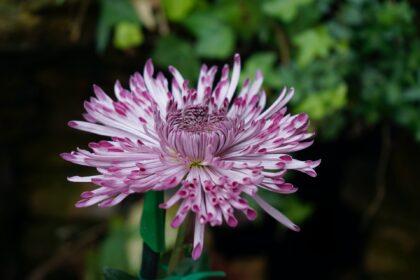 Flower Communion -- Renee Fisher -- Unsplash