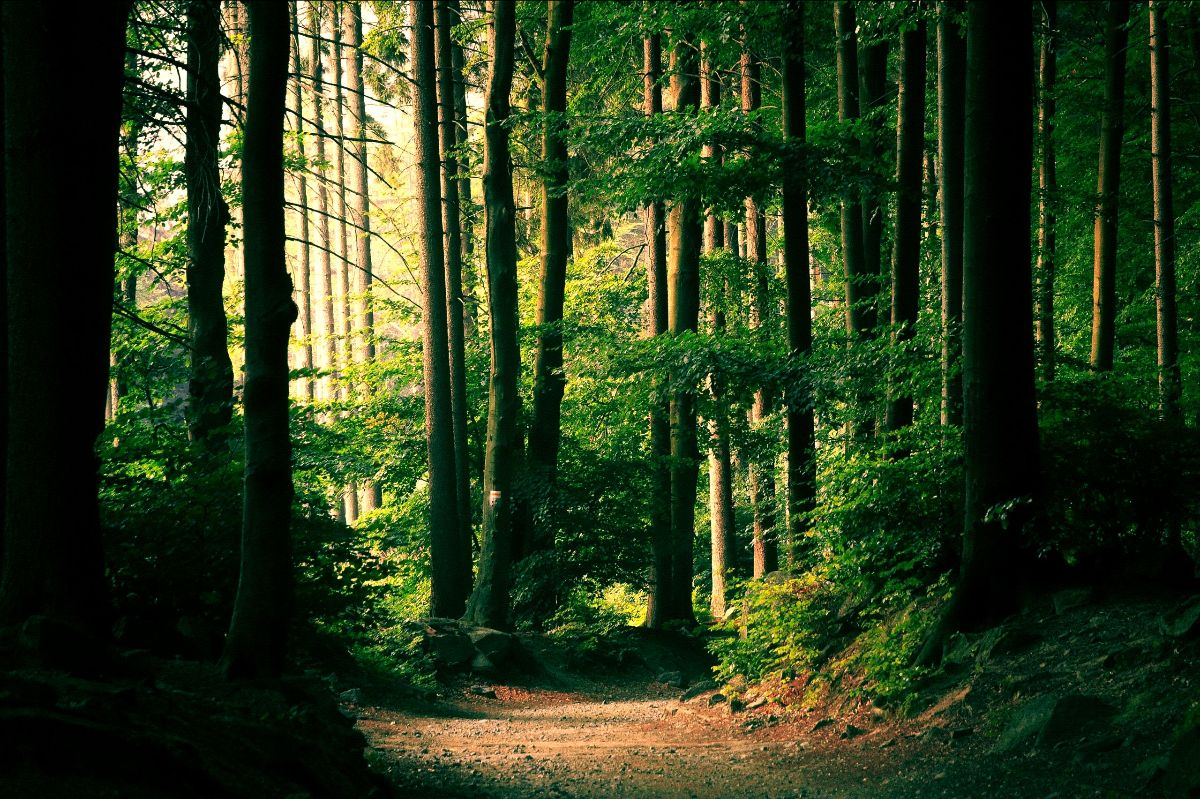 edited forest image
